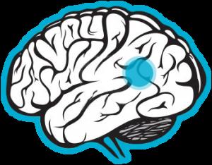 transtorno comprometimento cognitivo leve CCL avaliacao neuropsicologica cognitiva 63