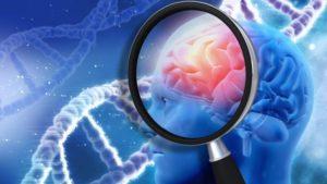 Pesquisas mostraram aos cientistas que Mal de Alzheimer começa a matar neurônios em partes do encéfalo diferentes do que se imaginava